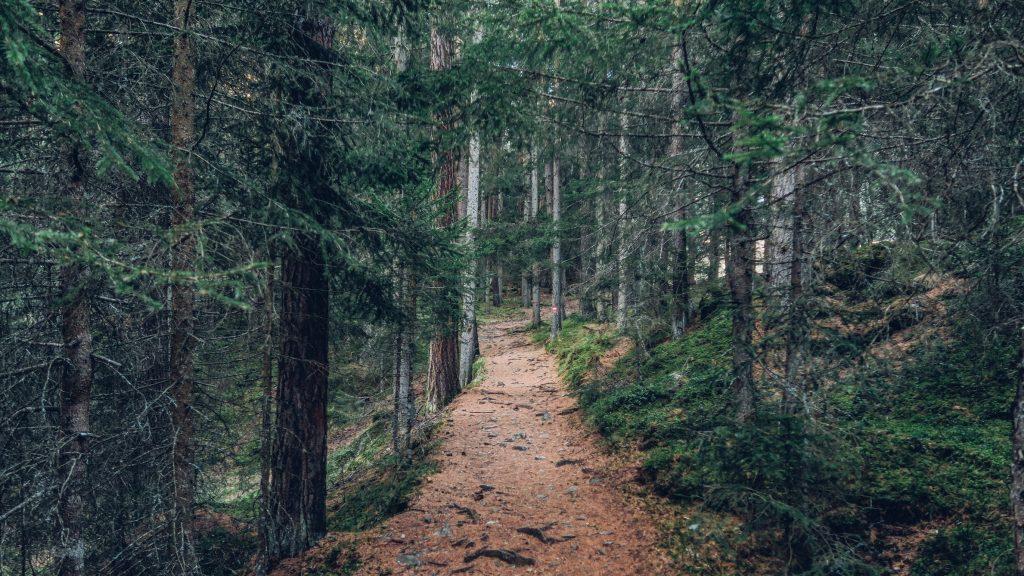wandelpad bos - tien jaar van mijn leven